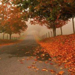 Itt van az ősz itt van újra
